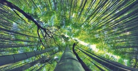 a rainforest that has an ethical supply chain